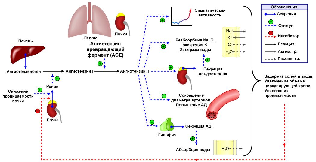 hipertenzijos slėgio kritimas