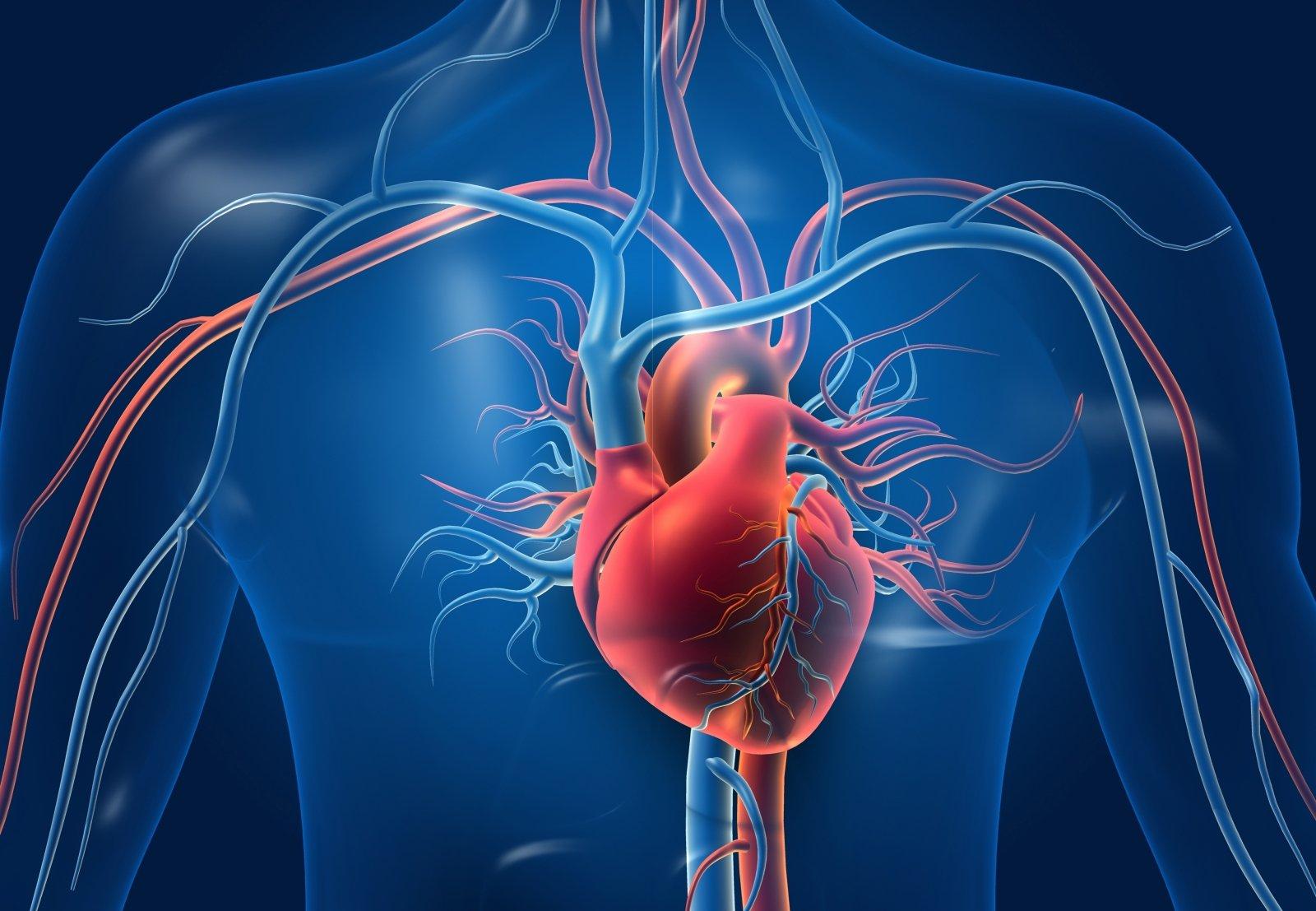 kaip širdies ir kraujagyslių sveikata sumažina širdies ligų riziką trokserutinas nuo hipertenzijos