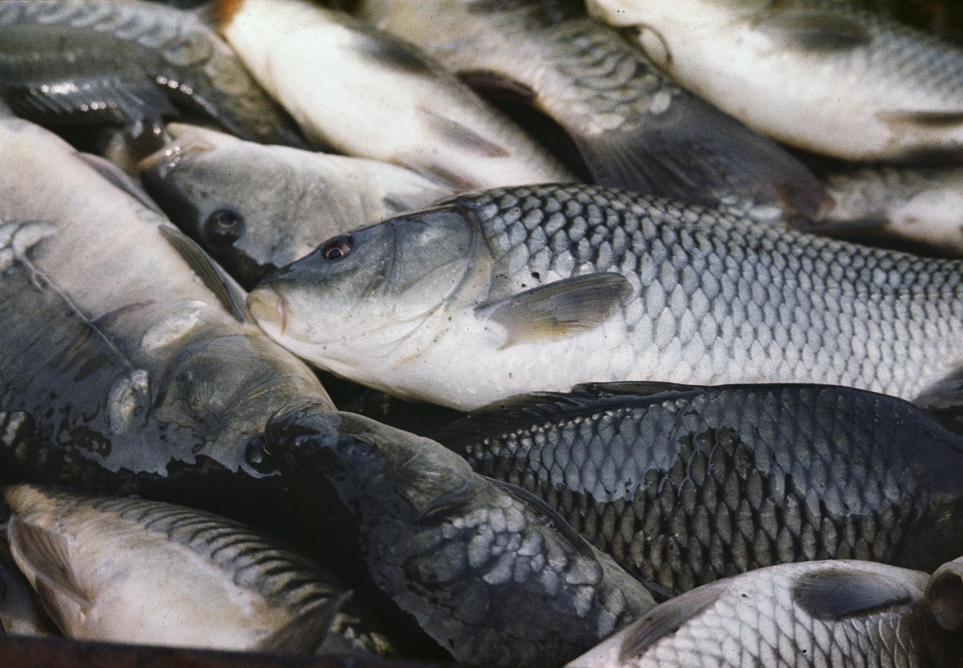 Žuvies nauda moters grožiui ir sveikatai | taksi-ag.lt