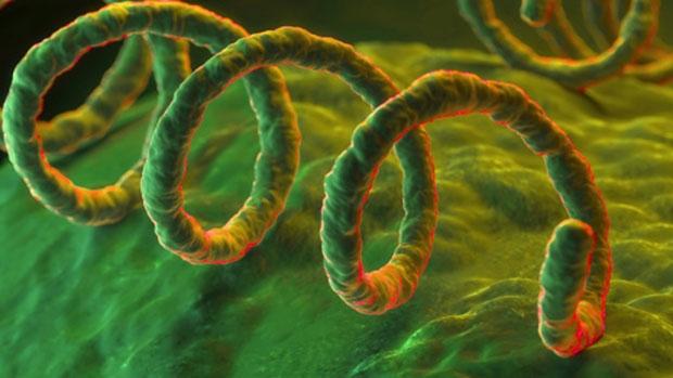 sifilis su hipertenzija