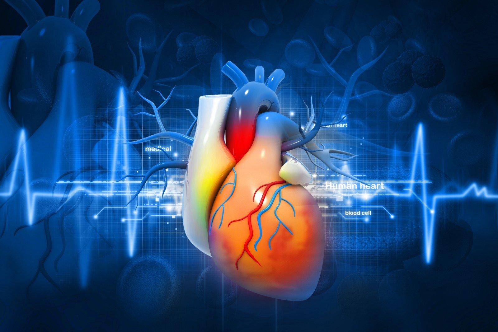 kraujotakos sveikatos širdies senjoras