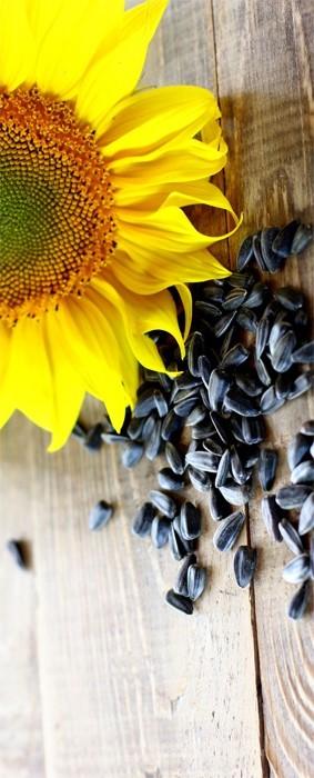 Saulėgrąžų sėklų nuėmimas hipertenzijai: ar tai tikrai veikia?