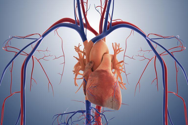 širdies sveikatos dieta afrikiečių amerikiečiams būdama 18 metų hipertenzija