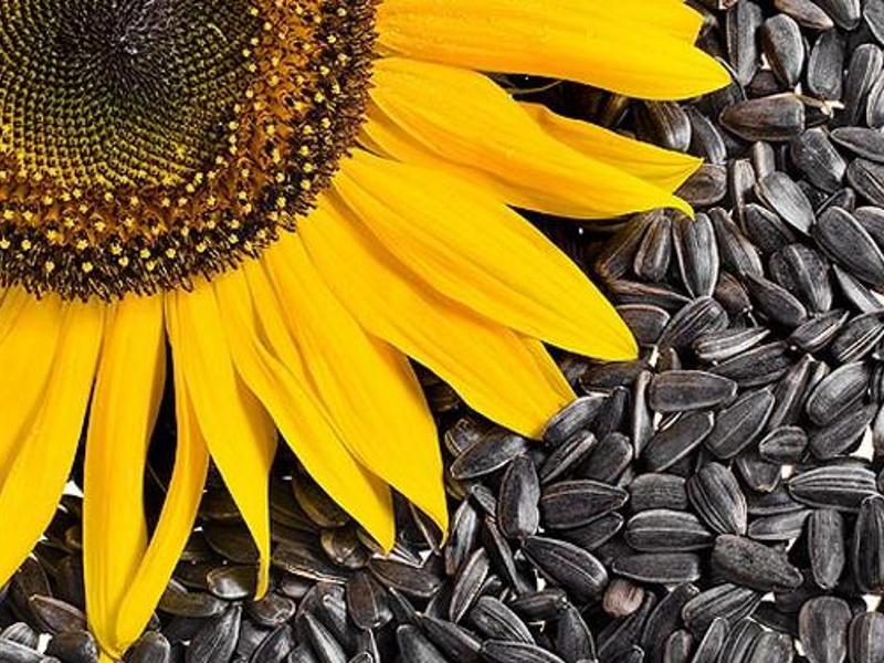 saulėgrąžų sėklos ir hipertenzija