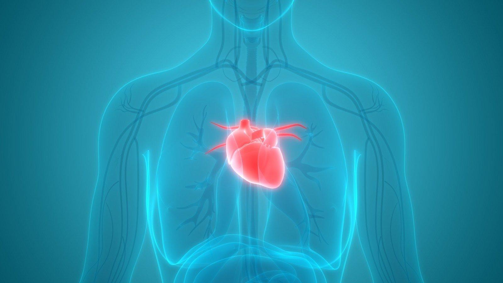 6 svarbiausi klausimai, kuriuos turite užduoti savo širdies gydytojui   taksi-ag.lt