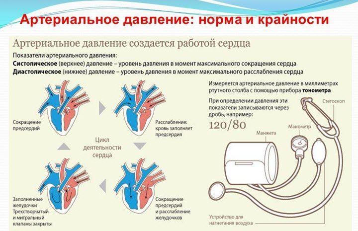Kaip raudonmedis veikia kraujo spaudimą
