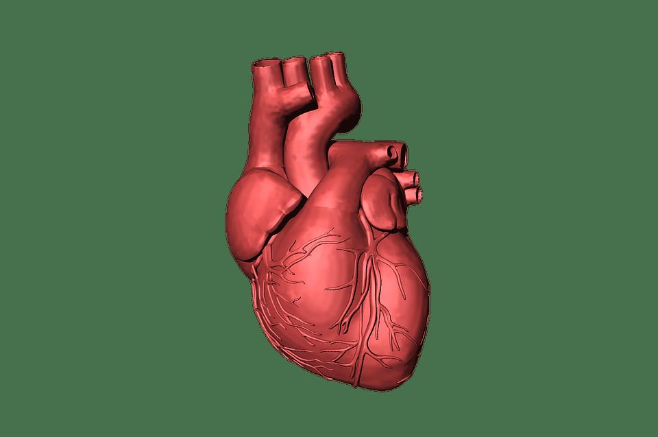 hipertenzijos šaknys hipertenzija paūmėjimo metu
