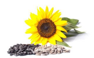 saulėgrąžų sėklos naudingos hipertenzijai
