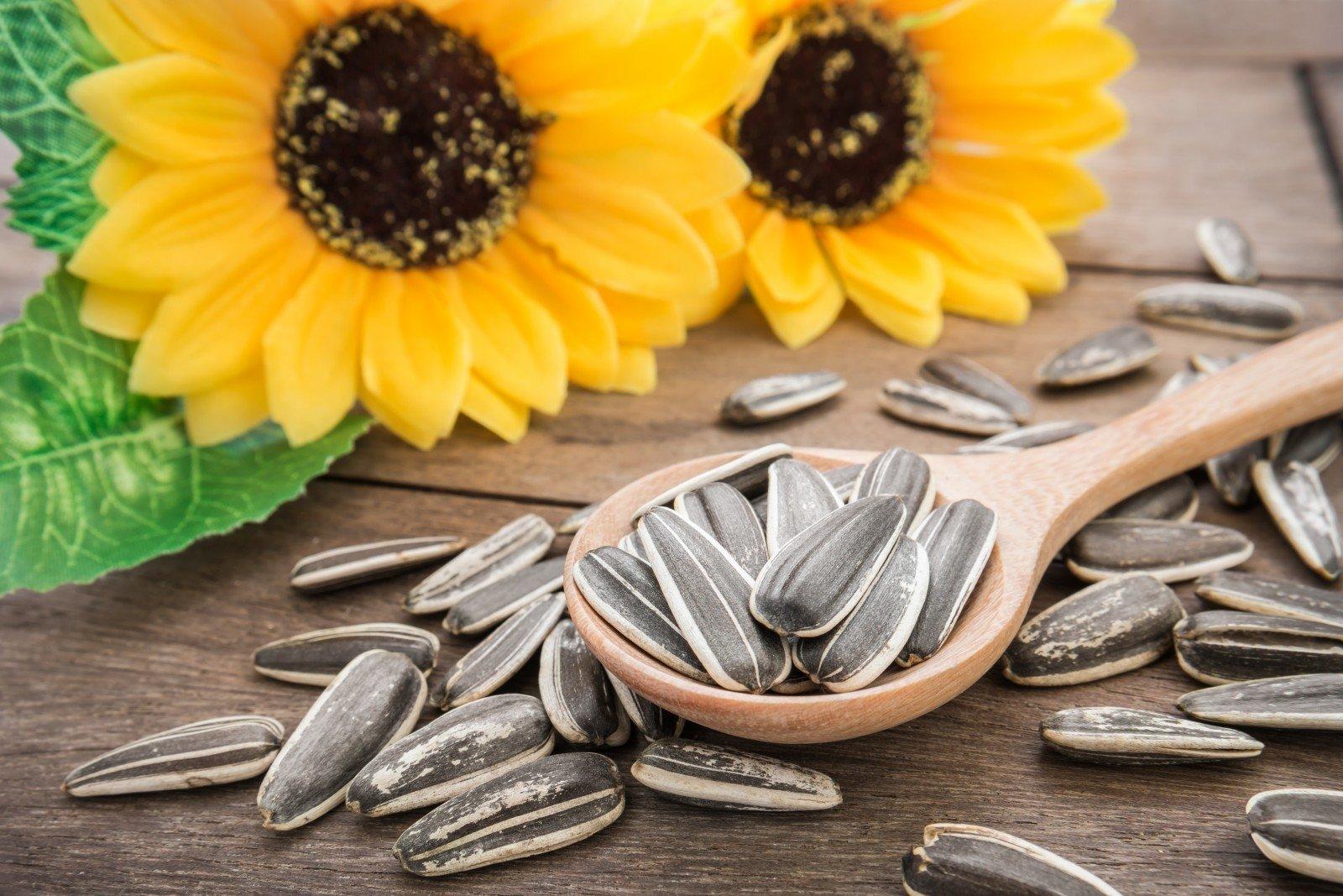 Saulėgrąžų sėklų nuėmimas hipertenzijai: ar tai tikrai veikia? - Receptai November